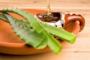 L'aloe vera dans votre assiette