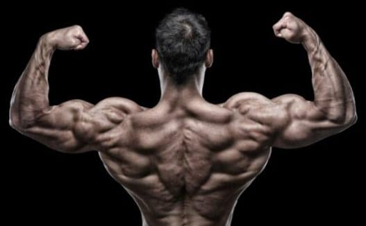 utilisation de stéroïdes pour la musculation